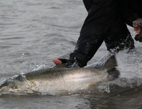 Properly Releasing A Salmon