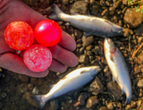 Big Beads For Coho On The Egegik